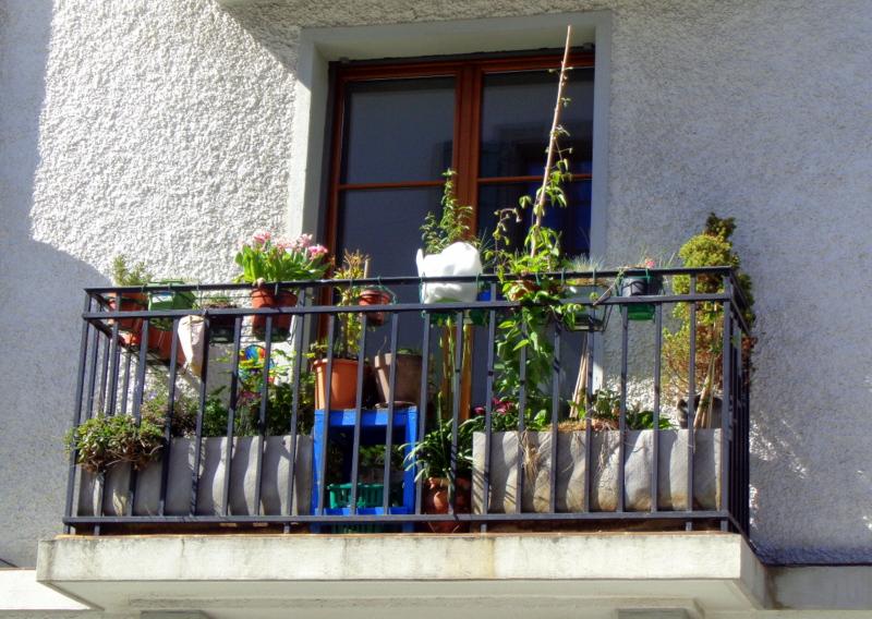 Nombreuses plantes en pot