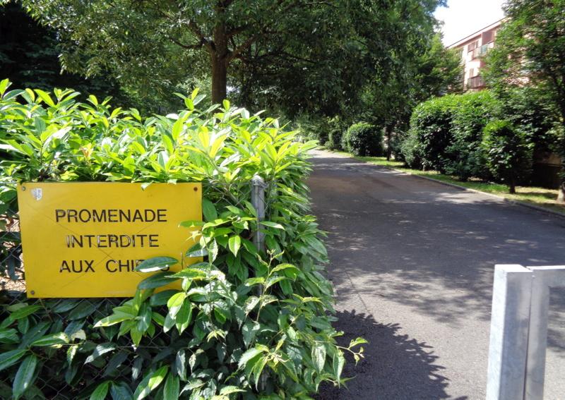 Promenade longeant le Cycle d'Orientation de l'Aubépine - on y a croisé deux chiens, peut-être à cause du feuillage qui pousse devant le panneau...