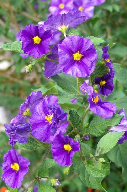 11. Fleurs d'été