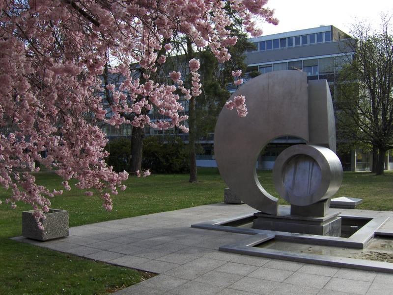 7. Cerisier du Japon en fleur près de la fontaine