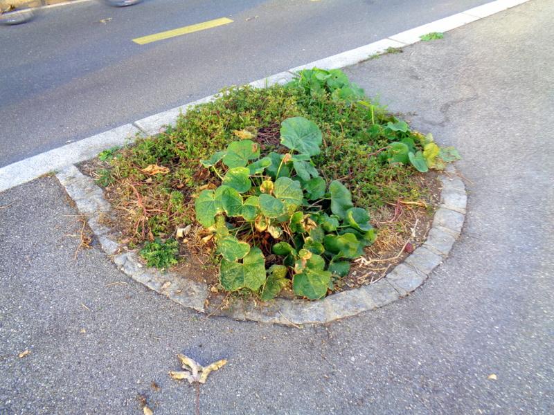 Toutes sortes d'herbes et de plantes prennent possession des lieux