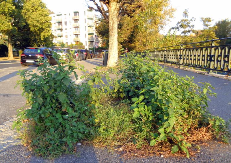 Au début de l'Avenue de la Roseraie, côté pont de la Fontenette