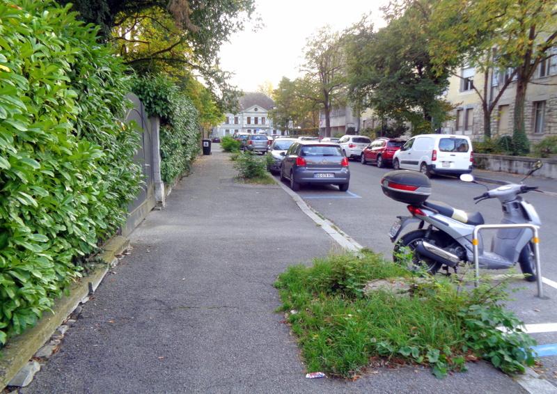 A l'Avenue de Beau-Séjour, toute la rangée d'arbres à gauche à disparu...