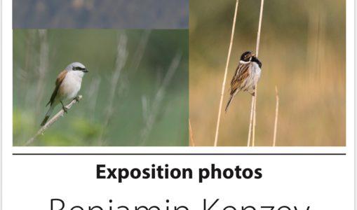 Exposition photographique animalière