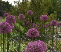 Le Jardin botanique alpin de Meyrin