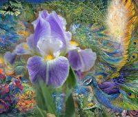 Voilà la saison des iris