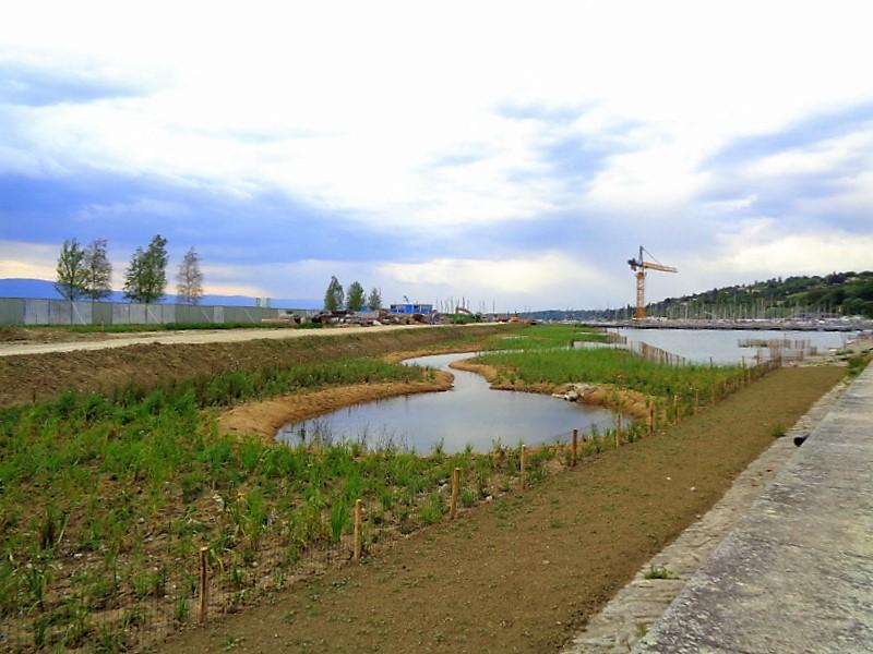 La roselière, jardin d'eau et espace nature en cours de réalisation