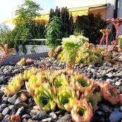 Réchauffement climatique : pensons aussi aux toits végétalisés !