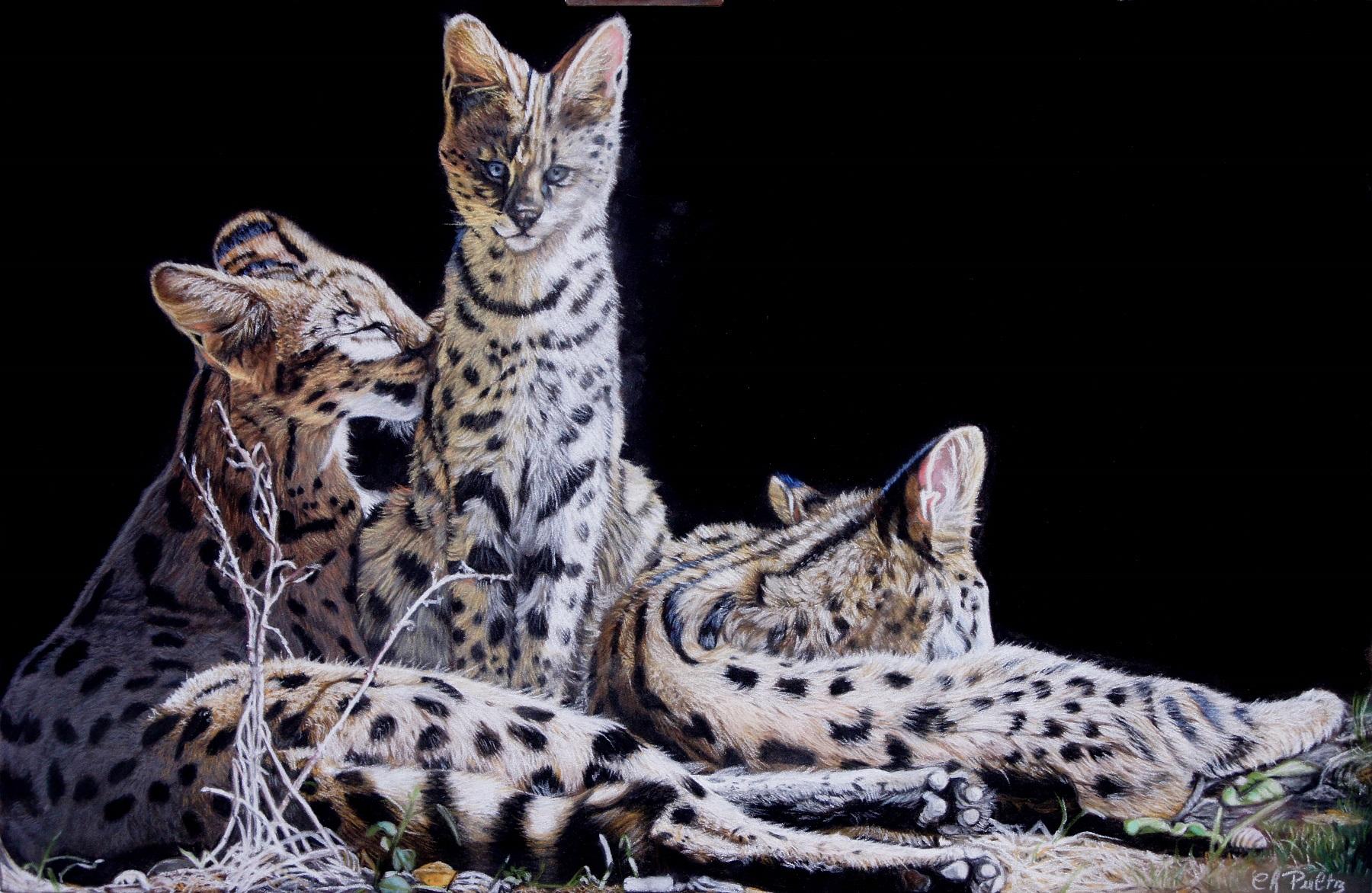 Servals Pastel 32 x 50 cm