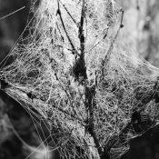 Web naturel. A+