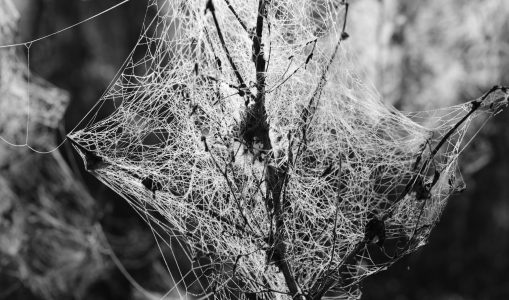 Web naturel. A+