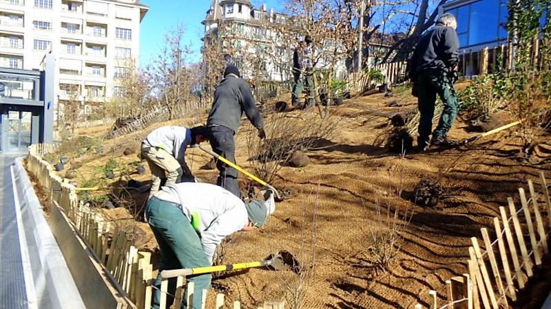 15.Pendant ce temps, les paysagistes de Jacquet S.A.s'affairent à planter les derniers arbustes