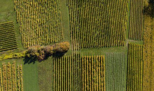 Le noble vignoble aux multiples couleurs de la rive gauche