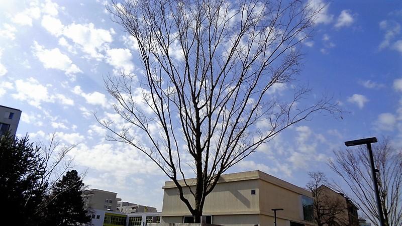 Des arbres qui tendent leur branches vers le ciel…
