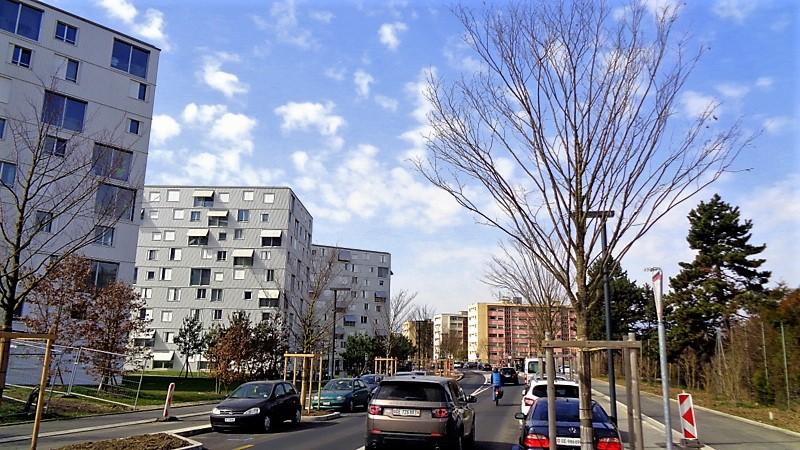 Des plantations d'arbres de chaque côté de la route
