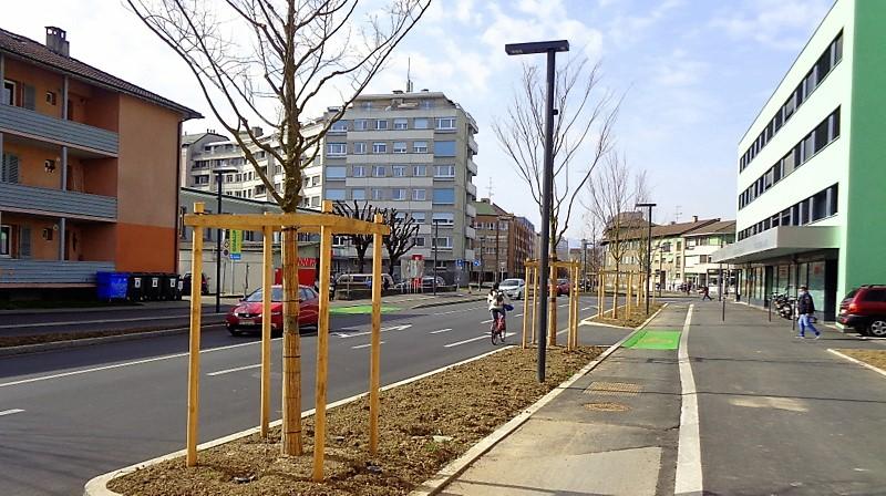 Les nouveaux arbres jusqu'au carrefour Fontenette/route de Veyrier