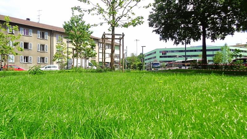 Une pelouse verdoyante