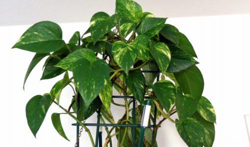 Des plantes vertes pour embellir nos appartements